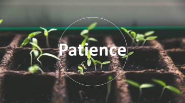 A seed needs nurturing. A sprout needs care. A plant needs love. Each and every is a process. Patience is a virtue.